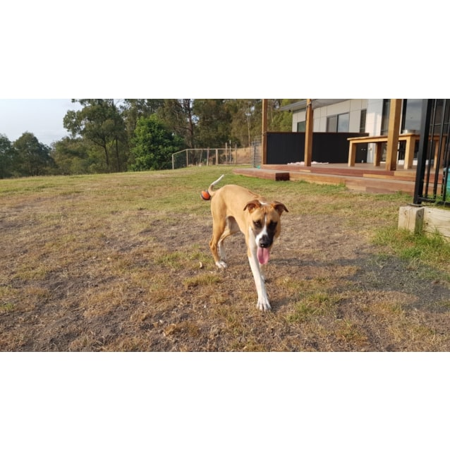 Photo of Leila