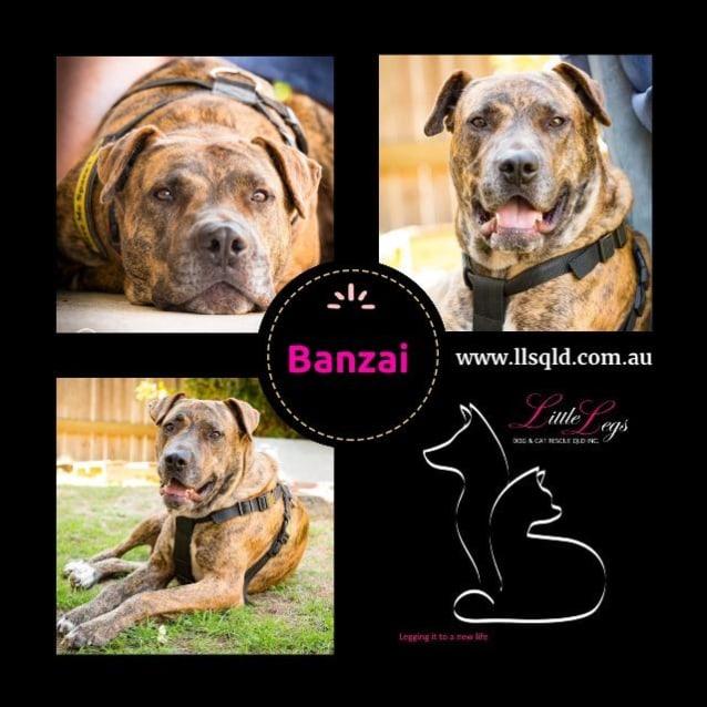 Photo of Banzai