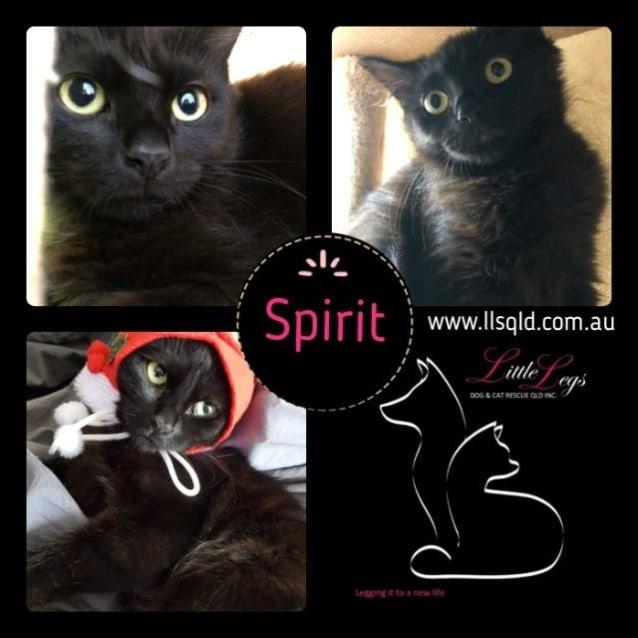 Photo of Spirit