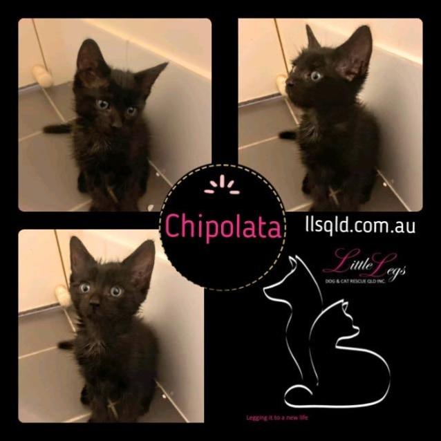 Photo of Chipolata