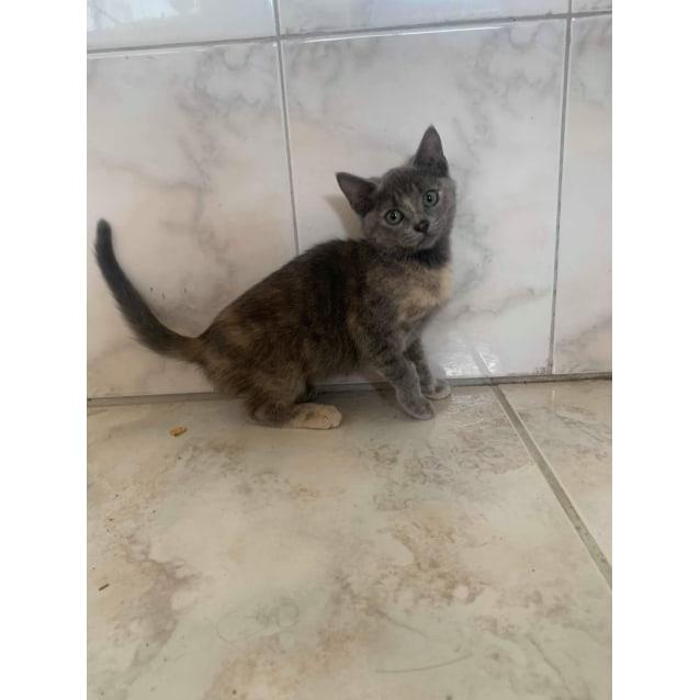 Photo of Dora ❤