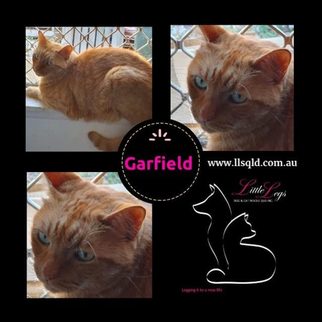 Photo of Garfield