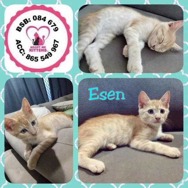 Photo of Esen