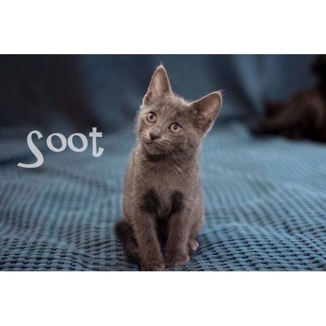 Photo of Soot