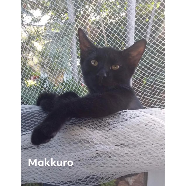 Photo of Makkuro