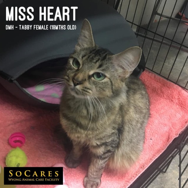 Photo of Miss Hearts