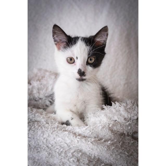 Photo of Dotti