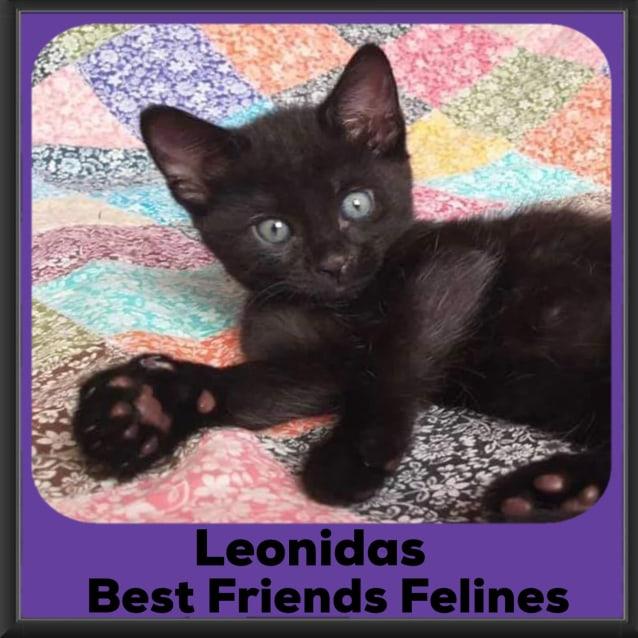 Photo of Leonidas