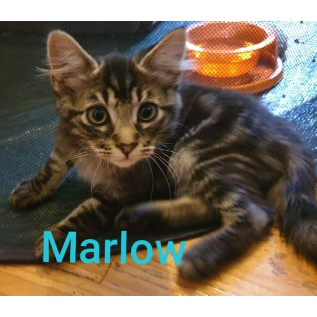Photo of Marlow