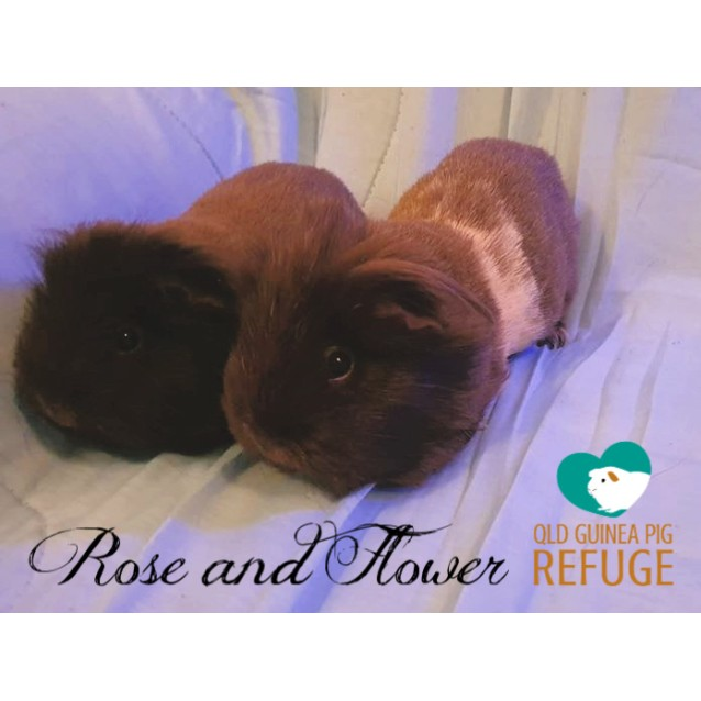 Photo of Rose And Flower (Indoor Home Only)