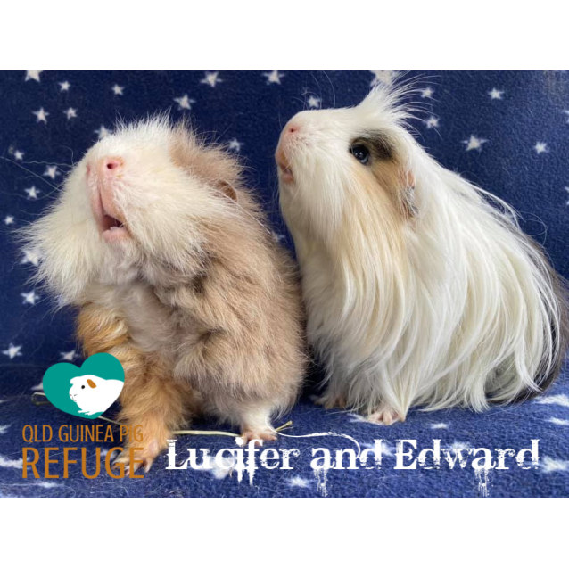 Photo of Lucifer And Edward (Indoor Home Only)