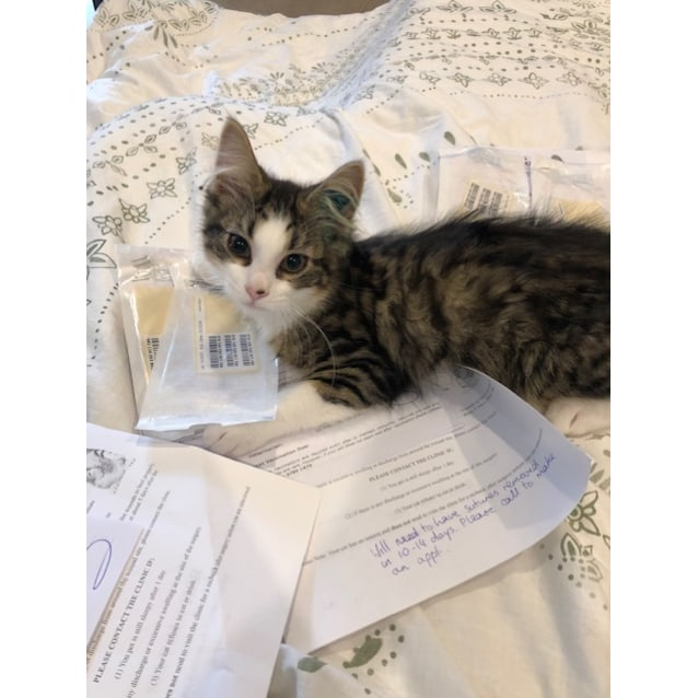 Photo of Jaskier **2nd Chance Cat Rescue**