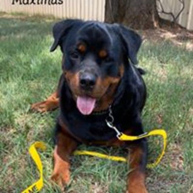Photo of Maximus