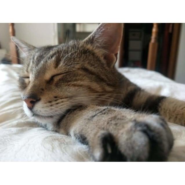 Photo of Baby Cat