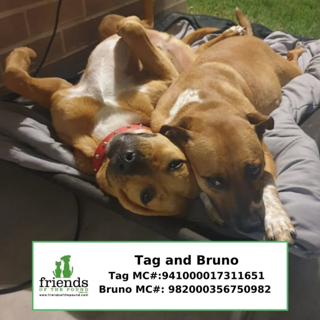Photo of Tag And Bruno