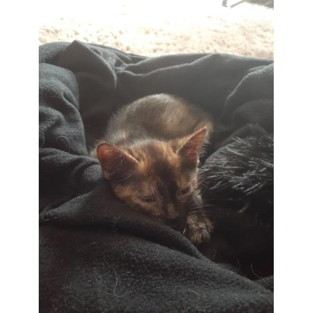 Photo of Lyra