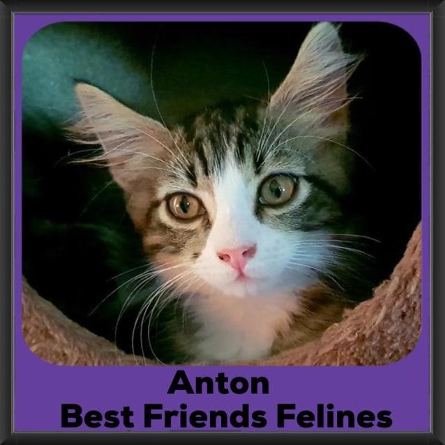 Photo of Anton