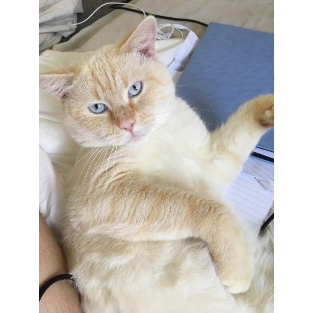Photo of Vinnie (Vincent)