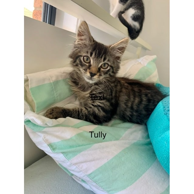 Photo of Tully