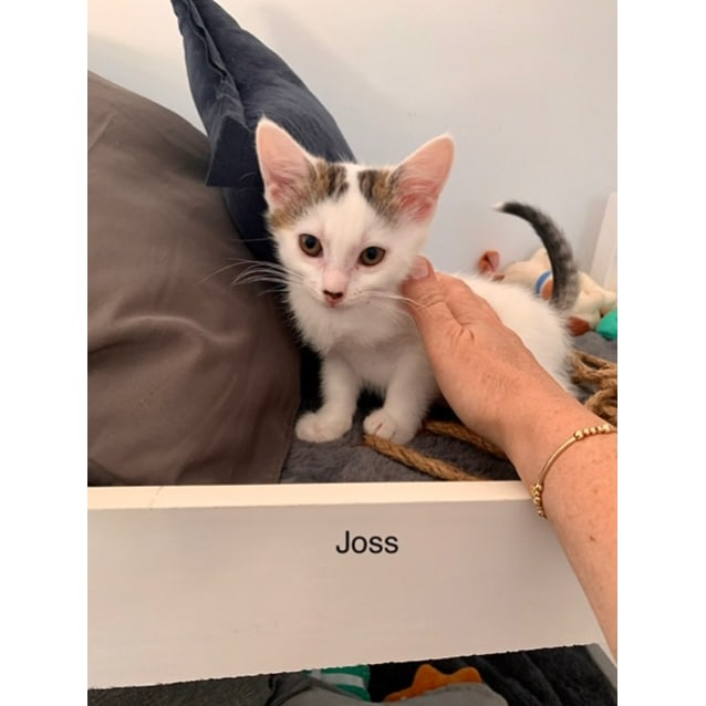 Photo of Joss (Jocelyn