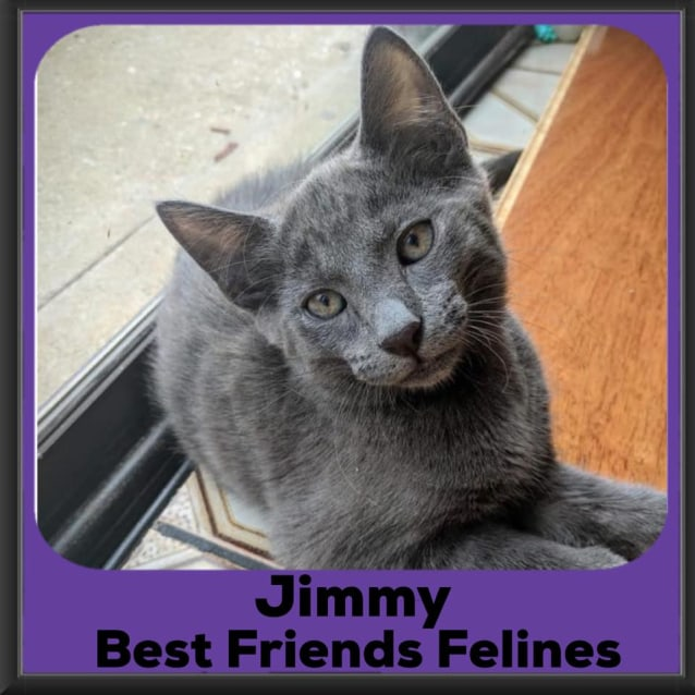 Photo of Jimmy