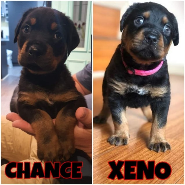 Photo of Xeno And Chance
