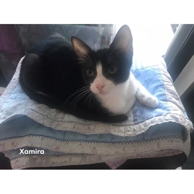Photo of Xamira
