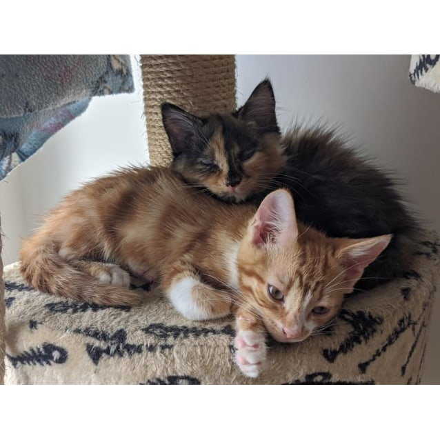 Photo of Chester And Nora