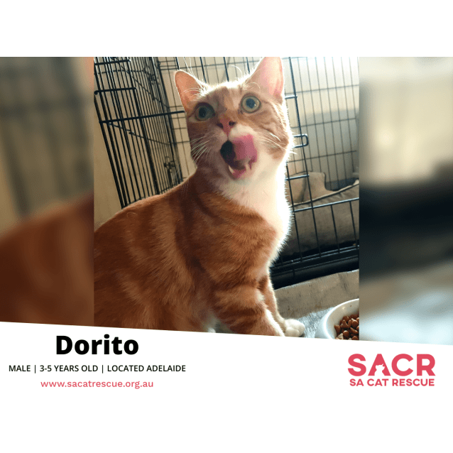 Photo of Dorito