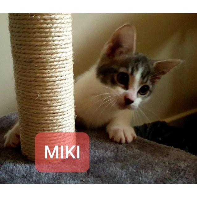 Photo of Miki, Bear, Callie, Chloe, Fred & George