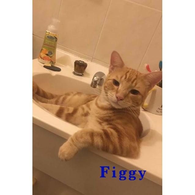Photo of Figgy