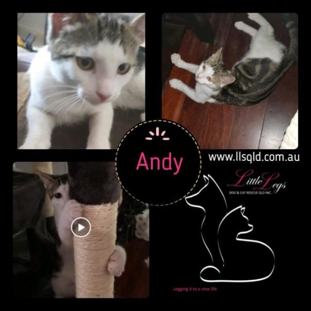 Photo of Andy