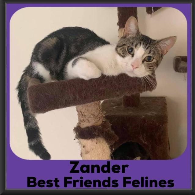 Photo of Zander