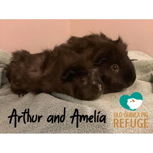 Photo of Arthur (Desexed Male) And Amelia