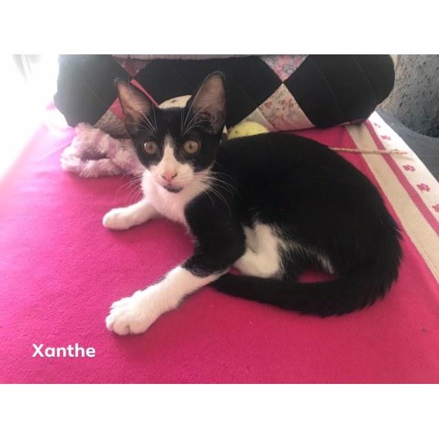 Photo of Xanthe