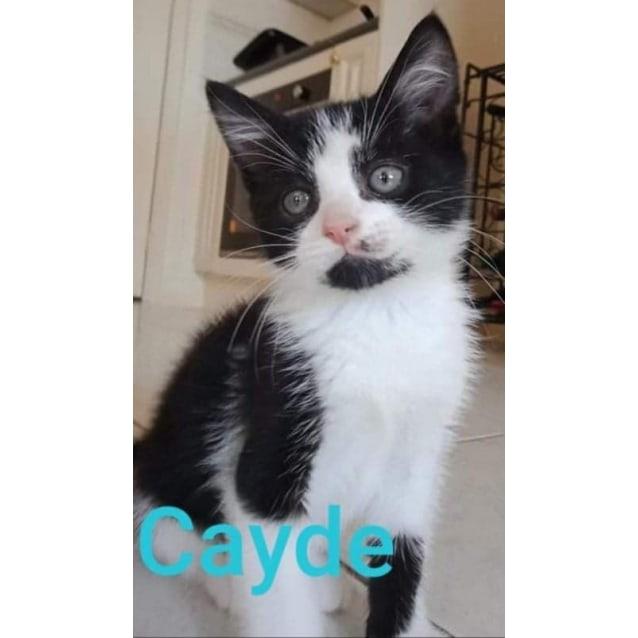 Photo of Cayde