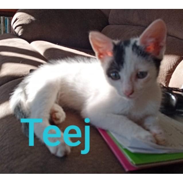 Photo of Teej