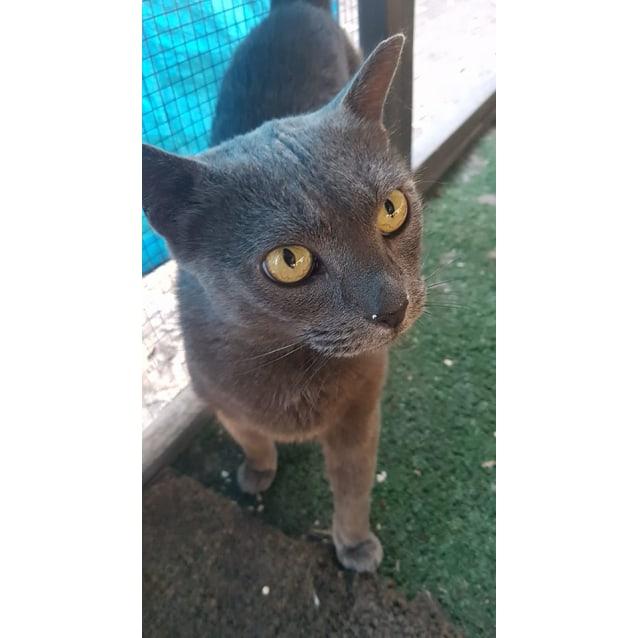 Photo of Pearla