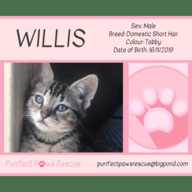 Photo of Willis