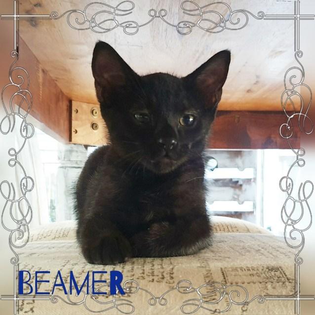 Photo of Beamer