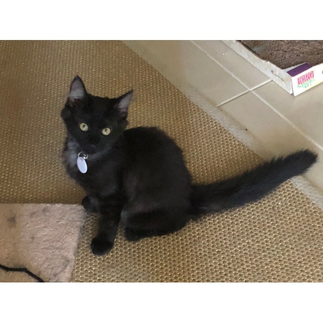 Photo of Shadow (Located In Clyde North)