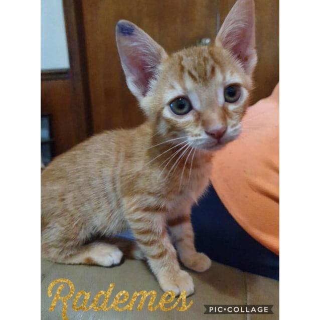 Photo of Rademes