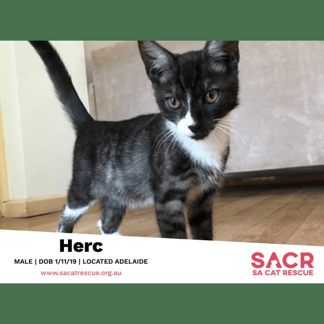 Photo of Herc