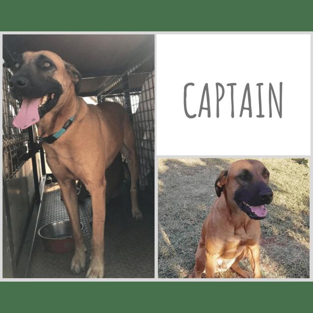 Photo of Captain