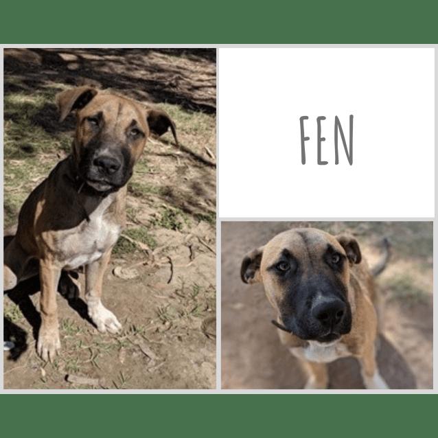Photo of Fen