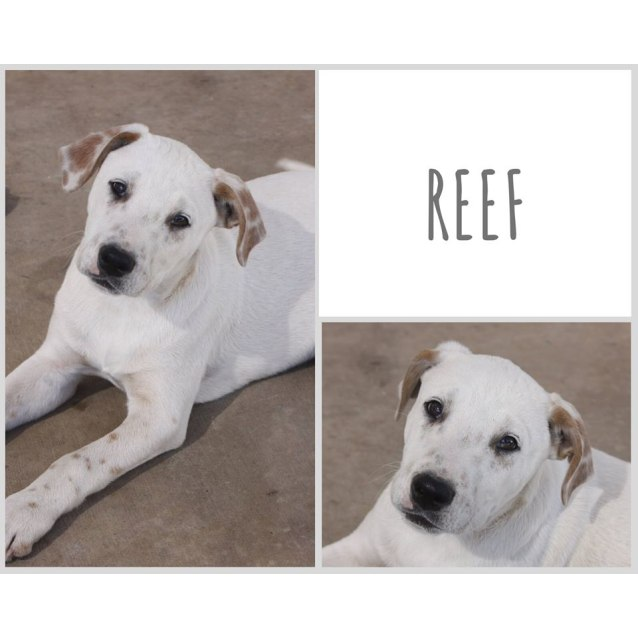 Photo of Reef