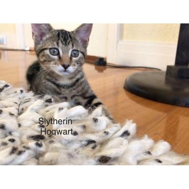Photo of Slytherin