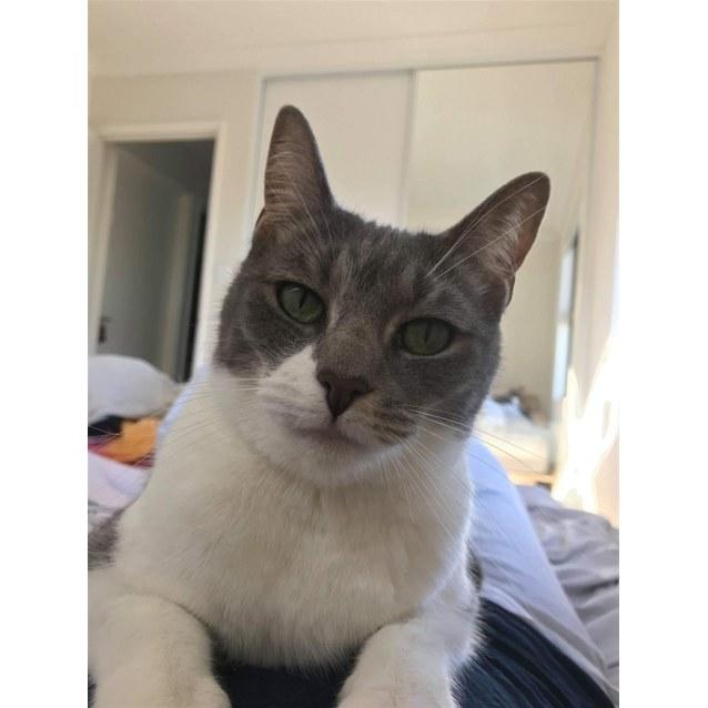 Photo of Meow Meow