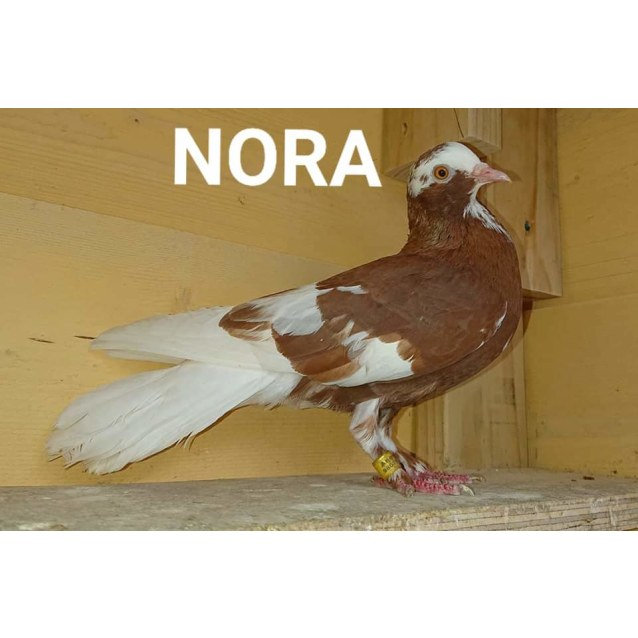Photo of Nora