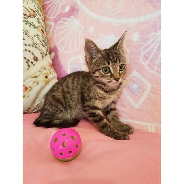 Photo of Rescue Kitten Showroom
